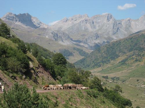 guarrinza-y-vacas